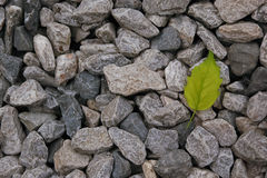 Leaf on the rock. In zen idea Stock Images