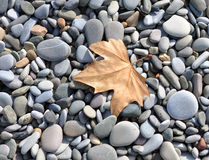 Leaf on the rocks Royalty Free Stock Image