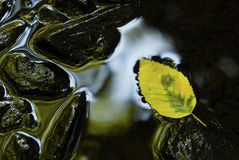 Leaf and Rocks in  Still water Stock Photo