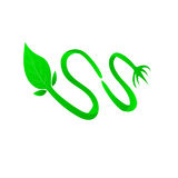 Leaf and Root Vector royalty free illustration