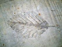 Leaf rubbing Stock Image