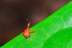 Leaf-rullande vivel royaltyfri bild