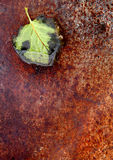 Leaf on Rust background Royalty Free Stock Images