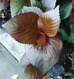 Leaf& x27 s στοκ εικόνα με δικαίωμα ελεύθερης χρήσης