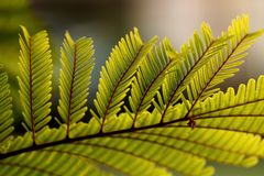 Leaf& x27;s life royalty free stock photography