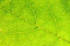 Leaf's Textures. A close up of a green leaf's textures Stock Images