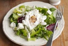 Leaf salad Royalty Free Stock Photos