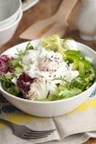 Leaf salad Stock Images