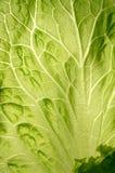 Leaf of salad Royalty Free Stock Photos