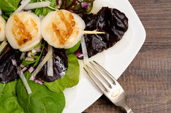 Leaf salad with roasted scallops. Green and read leaf salad with roasted scallops Royalty Free Stock Photos