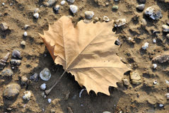 Leaf in the sand Stock Photo