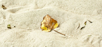 Leaf in sand Royalty Free Stock Photography
