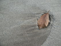Leaf in sand Stock Images