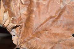 Leaf sand bank in autumn. Surface with ribbings of a leaf sand bank Royalty Free Stock Image