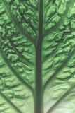 A leaf of a savoy cabbage closeup, the leaf veins and texture, macro. A leaf of a savoy cabbage closeup, the leaf veins and texture, macro stock image