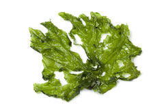 Leaf of Sea lettuce Royalty Free Stock Photos