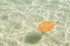 Leaf on the sea at Samet island in Thailand Royalty Free Stock Images