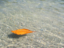 Leaf sea Royalty Free Stock Photography
