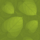 Leaf seamless background. Seamless background with highly detailed green leaves Royalty Free Stock Photo