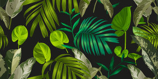 Leaf seamless pattern. Illustration of leaf seamless pattern Stock Image