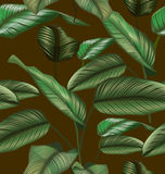 Leaf seamless pattern. Illustration of  Calathea majestica seamless pattern Royalty Free Stock Photography