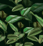 Leaf seamless pattern. Illustration of  Calathea majestica seamless pattern Royalty Free Stock Photo