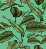 Leaf seamless pattern. Illustration of  Calathea majestica seamless pattern Royalty Free Stock Images