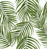Leaf seamless pattern. Tropical palm leaves seamless pattern Stock Photos