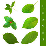 Leaf set Royalty Free Stock Photos