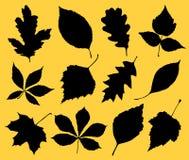 Leaf set Royalty Free Stock Photos