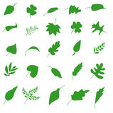 Leaf set Royalty Free Stock Photography