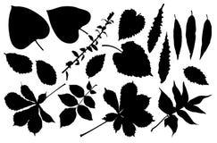 Leaf set Royalty Free Stock Photo