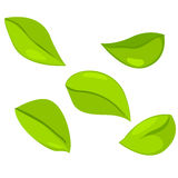 Leaf set. On a white background Royalty Free Stock Images