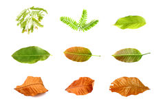 Leaf set isolate Stock Photo
