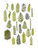 Leaf set, sketch for your design Royalty Free Stock Images