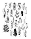 Leaf set, sketch for your design Stock Image
