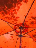 Leaf shadow silhouettes through a red patio umbrella. royalty free stock images