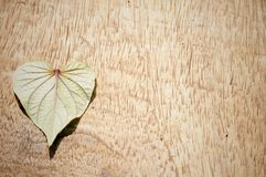Leaf in the shape of a love heart Stock Photography