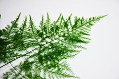 Leaf-shaped, μικρός, λεπτός, ιδανικός για την εργασία υποβάθρου Ή γραφική παράσταση Στοκ Εικόνα