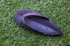 Leaf shaped slipper Royalty Free Stock Photography