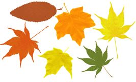 Leaf shapes. Leaf outlined shapes on a white background. Create your own leaf collage projects Stock Photos
