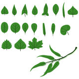 Leaf Shapes Royalty Free Stock Image