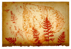 Leaf shapes on old paper sheet Stock Images