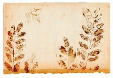 Leaf shapes on old paper sheet Stock Images