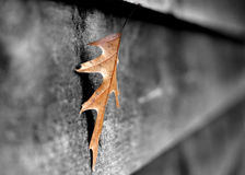 Leaf on shed. A leaf on a wooden shed Royalty Free Stock Photography