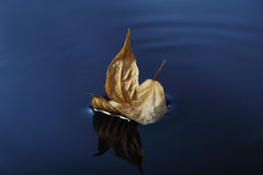 Leaf ship Royalty Free Stock Photos