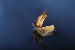 Leaf ship Stock Photography