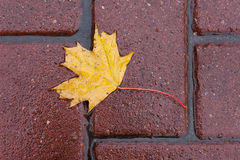 Leaf on sidewalk Royalty Free Stock Image