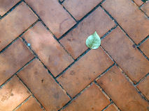 Leaf on a Sidewalk. Abstract background Stock Photos