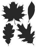 Leaf Silhouette Set. A set of various leaves Royalty Free Stock Images